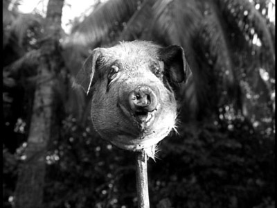 pig-head5.jpg
